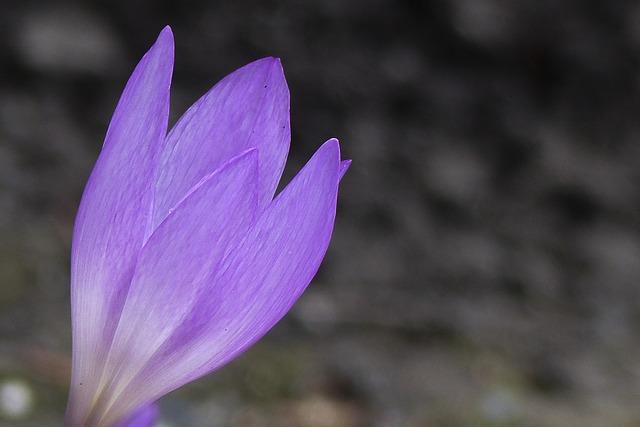 purple-196692_640